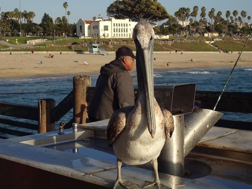 ロサンゼルスレドンドビーチ